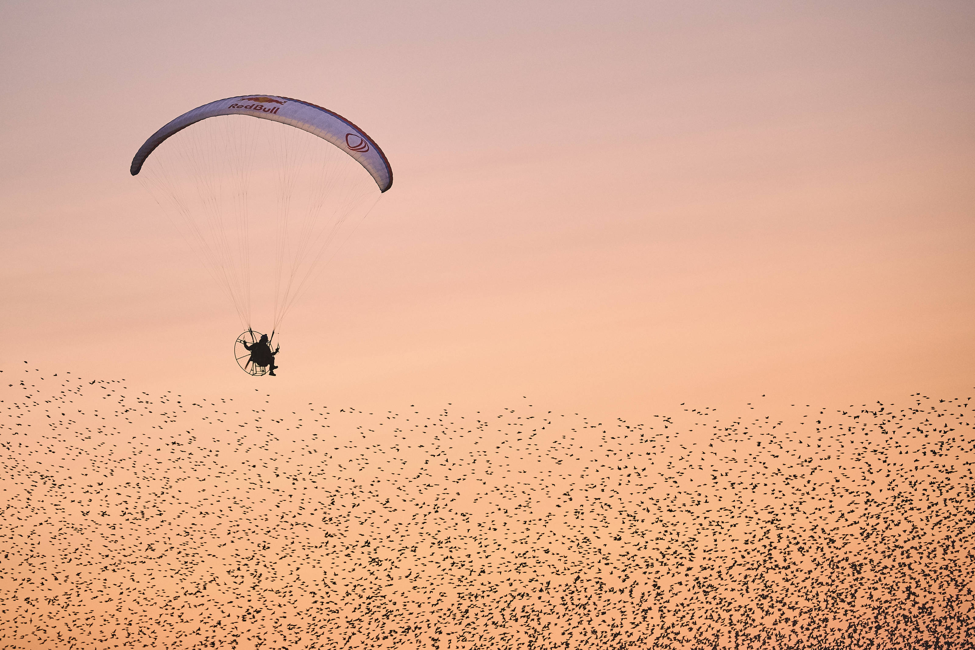 Paraglider Llorens flies with the birds - ASC - Action Sports Connection